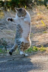 The-kitty-jig
