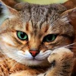 thinking cat1 (2)